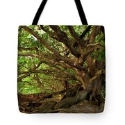 Branches And Roots Tote Bag by James Eddy