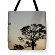 Branches In The Sunset Tote Bag