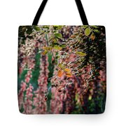 Branches Of A Tree With Colorful Leaves Shining In The Sunlight Tote Bag