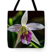 Brassocattleya Orchid Tote Bag