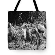 Brazil: Monkeys Tote Bag