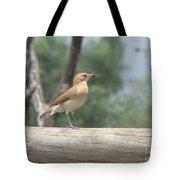 Brazilian Ovenbird Tote Bag