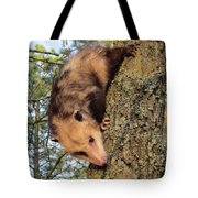 Brer Possum Tote Bag by David Sutter