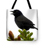 Brewer's Blackbird Tote Bag