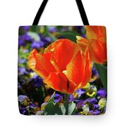Bright And Colorful Orange And Red Tulip Flowering In A Garden Tote Bag