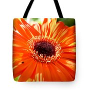 Bright Orange Gerbera  Tote Bag
