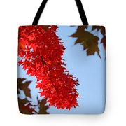 Bright Red Sunlit Autumn Leaves Fall Trees Tote Bag