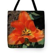 Brilliant Orange Tulip Flower Blossom Blooming In Spring Tote Bag