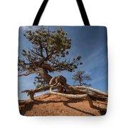 Bristle Cone Tree Tote Bag