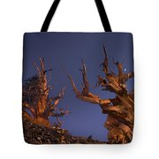 Bristlecone Pines At Sunset With A Rising Moon Tote Bag