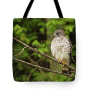 Broad Winged Hawk On The Lookout Tote Bag