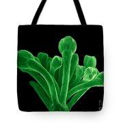 Broccoli, Esem Tote Bag
