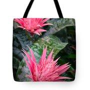 Bromeliad Plant 3 Tote Bag