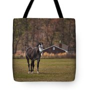 Brown And White Horse Tote Bag