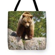 Brown Bear 3  Tote Bag