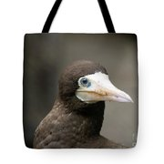 Brown Booby Tote Bag