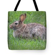 Brown Bunny In Grass Tote Bag