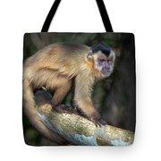 Brown Capuchin Monkey Cebus Apella Tote Bag