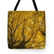 Brown County Colors Tote Bag