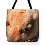 Brown Cow 2 Tote Bag