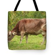 Brown Cow Grazing Tote Bag