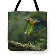 Brown-hooded Parrot Tote Bag