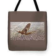 Brown Mayfly On Screening    Spring      Indiana Tote Bag