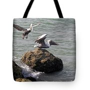 Brown Pelicans In Florida  Tote Bag