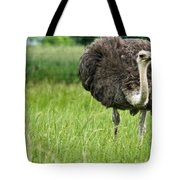 Browsing Ostrich Tote Bag