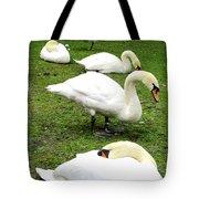 Bruges Swans 2 Tote Bag