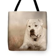 Brutus Dreaming Tote Bag by Elaine Teague