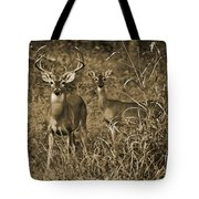 Buck And Doe In Sepia Tote Bag