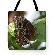 Buckeye Butterfly Tote Bag