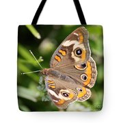 Buckeye Butterfly Square Tote Bag
