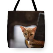 Buddhist Temple Cat Tote Bag