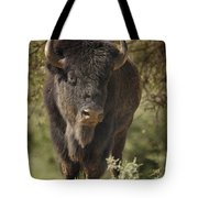 Buffalo Bull II Tote Bag