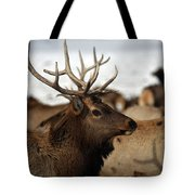 Bull Elk At Hardware Ranch Tote Bag
