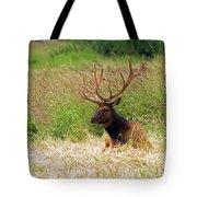 Bull Elk At Rest Tote Bag