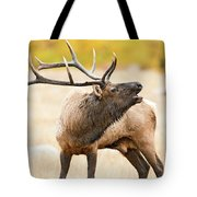 Bull Elk Bugling In The Fall Tote Bag