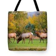 Bull Elk  Bugling With Cow Elks - Rutting Season Tote Bag