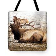 Bull Elk Calls Out Tote Bag
