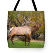 Bull Elk In Rutting Season Tote Bag