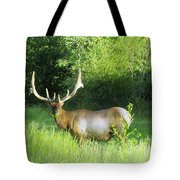 Bull Elk In Velvet  Tote Bag by Jeff Swan