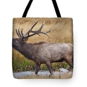 Bull Elk In Yellowstone Tote Bag by Wesley Aston