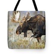 Bull Moose Crossing The Sage  Tote Bag