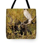 Bull Moose In Hiding Tote Bag