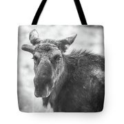 Bull Moose Tote Bag