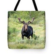 Bull Moose Stands Guard Tote Bag