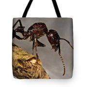 Bullet Ant Tote Bag