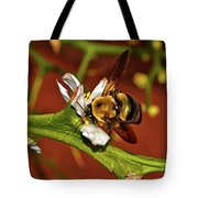 Bumblebee On A Hardy Orange Blossom 002 Tote Bag